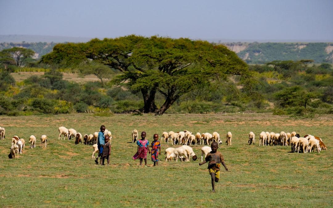 「アフリカへサファリに行く」エッセイ書きました