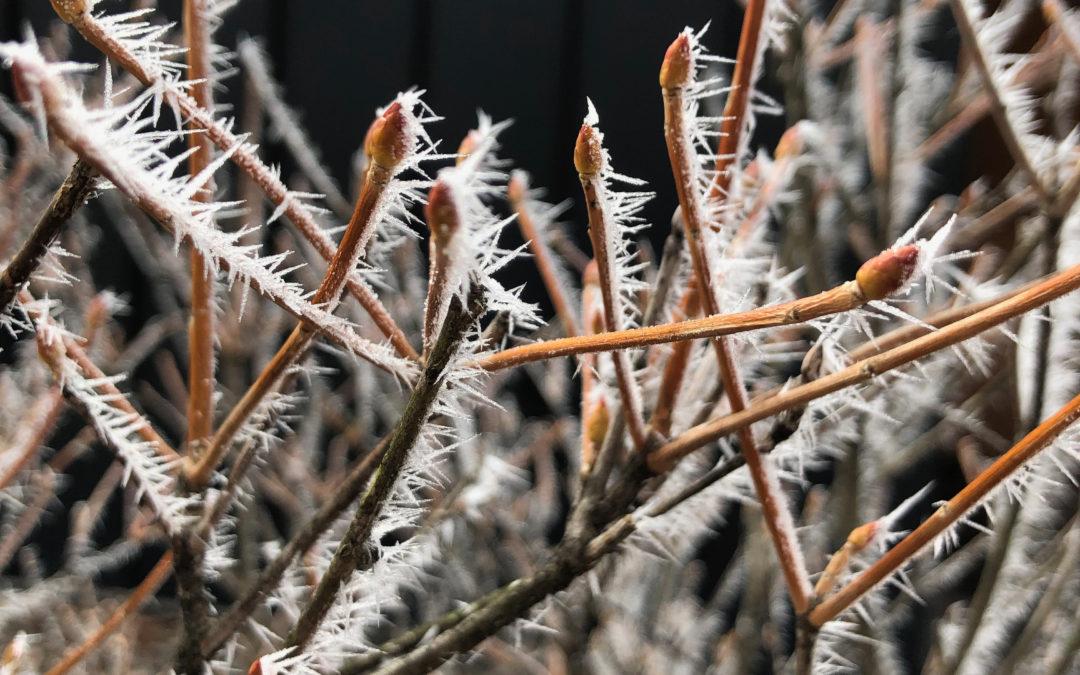 冬の軽井沢 ⚠️これでも今年は暖冬らしい