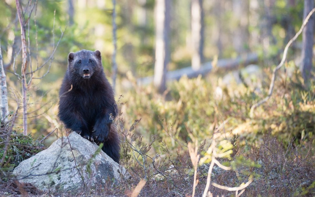 もしも熊に出遭ったら🐻