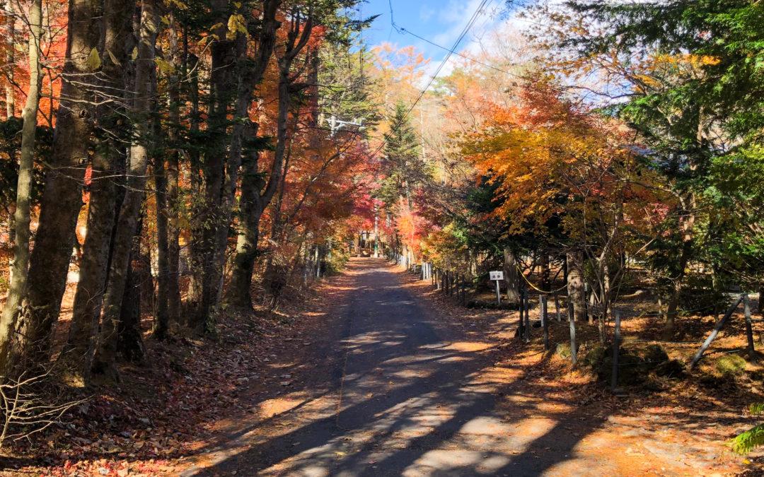 軽井沢もうすぐ紅葉おわり🍁