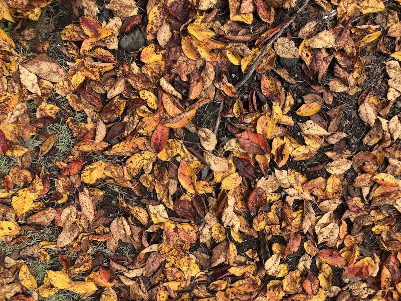離山10月紅葉はっぱ